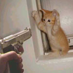 cat at gunpoint